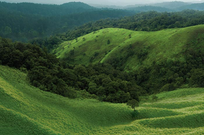 Kerala : De lourdes conséquences